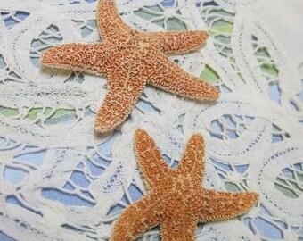 Mini Orange Starfish Sugar Starfish - 2 Sea Star Gems