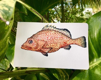 Red Hind Fish Hand Made Illustration