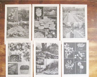 1943 The New Garden Encyclopedia Black & White Photo Plates for Framing Home Decor Paper Arts and Crafts Projects