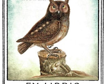 The Littlest Owl Bookplates (Personalized or Blank)