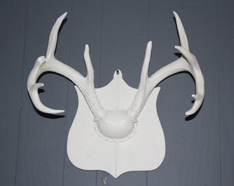 Deer Antler Wall Mount Vintage Taxidermy White