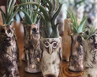 Wood Folk with Air plants