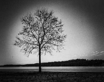 Tree Photo in Black and White for framing