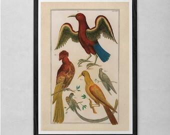 ANTIQUE ORNITHOLOGY PRINT- Antique Nature Print - Professional Reproduction - Vintage Bird Print Nature Wall Art Bird Art Print Nature Art