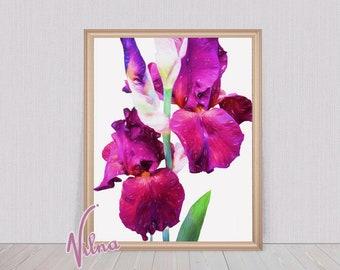 Red Iris Printable Painting/Iris Digital Wall Art/Pink Iris Print/Vivid Irises Wall Painting/Stylish Flower Art Download/Deep Red Irises