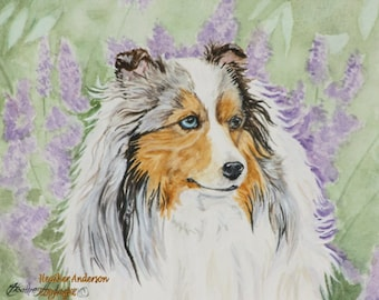 "8x10 Giclee Print, Sheltie Artwork, ""Sable Merle Sheltie"",  Hand Drawn, DOG LOVER GIFT, Shetland Sheepdog Art, dog art print"