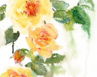 Roses/Yellow Roses/Roses Giclee Print From Watercolour