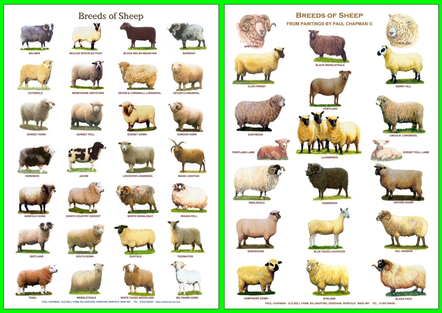 types of sheeps World famous meat type sheep breeds presented to: dr kashof ishaq  presented by: 14-arid-2022 pmas.