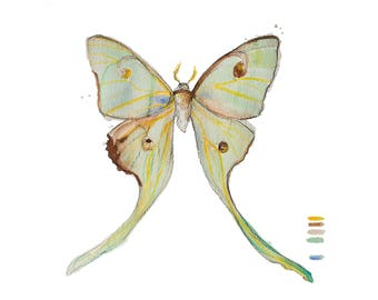luna moth art, minimal art, moth art, watercolor print, nature print, butterfly watercolor, luna moth print, minimalist wall art, modern art