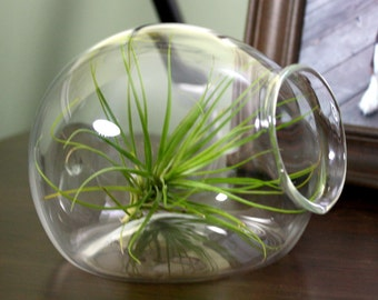hand blown glass igloo plant terrarium
