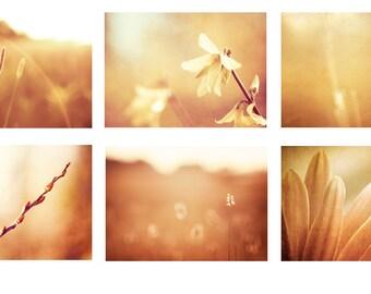 Gold Print Photo Set, Six Photographs 11x14, 8x10, 5x7 fall orange photography brown nature print set golden flower wall art botanical decor