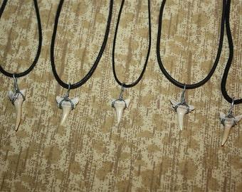 Shark Tooth / Shark Teeth - Necklace, Earrings, or Choker - SELECT STYLE