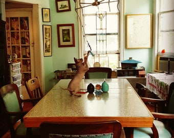 cat photo, animal photography, hairless cat, Sphynx cat, kitten, vintage decor, aqua, turquoise, cat art, chandelier, table, dining room