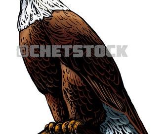 Eagle Perch