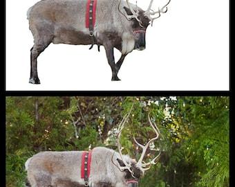 Reindeer Momma Overlay + Bonus Christmas Tree Farm Background!