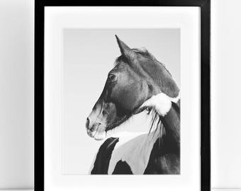 Modern Horse Photography, Paint Horse art, Black and White Animal Photograph, Physical Print