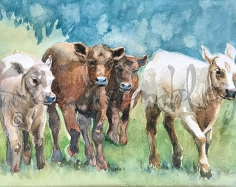 Cows Cow Print Calves Running in Pasture calf  art watercolor print  by Kris Trembley