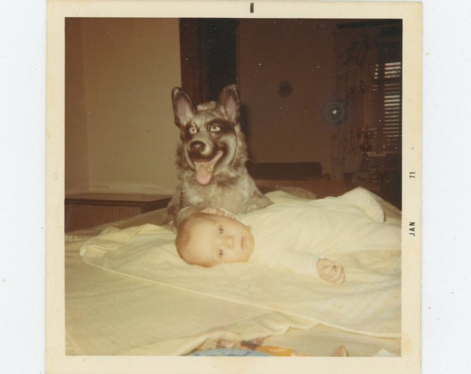 Vintage Snapshot Photo, 1971: Baby Sitting Dog [84663]