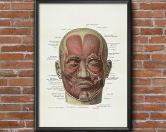 Old vintage Illustrations of Anatomy-Anatomy-medical Prints human face