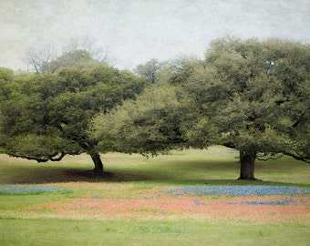 texas photography, landscape prints, nature art, rustic decor, bluebonnets, indian paintbrush, brenham, blue, red, green - Texas Bluebonnets