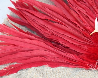 Red Coque feathers in 12 to 14 inch length-rooster tail feathers, Tahitian dance costume supply