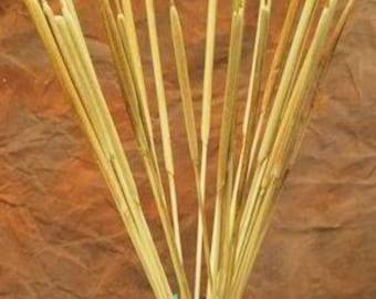 Dried Cattails | Pencil Cattails | Dried Pencil Cattails | Dried Plants | Dried Decor