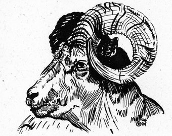 Note Card - 5 Pack - Big-Horned Sheep Pen and Ink Drawing on Cream-colored Paper with White Envelopes - Tied with Raffia - Christmas Gift