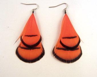 Feather earrings  Lady Amherst orange