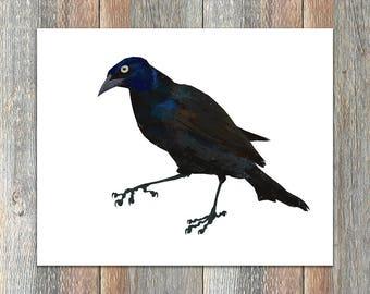 Common Grackle Bird Print