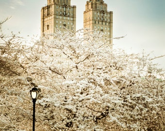 New York Photography, Central Park Spring Nyc Photo City Central Park Cherry Tree Blooming Manhattan Wall Art nyc77