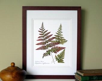 Pressed fern print, 11x14 double matted, Autumn Fern botanical art, wall art no. 0101