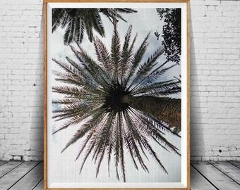 Palm Tree Print, Palm Leaves Print, Palm Tree Photo, Palm Tree Art, Palm Tree Wall Art, Printable Art Home Decor, Summer Art, Summer Print,