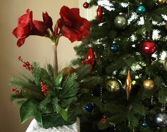 Holiday arrangement of red amaryllis with berries and greens in vintage ceramic container
