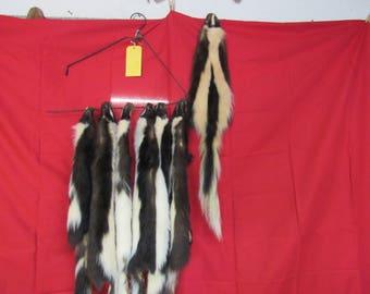 real Tanned Skunk Fur, Hide, Pelt