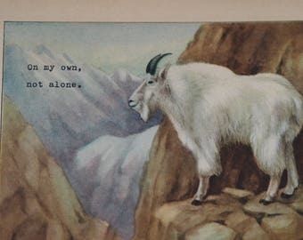 Mountain Goat - Vintage Animal Print (1927) with Original Typewriter Message - On my own, not alone.