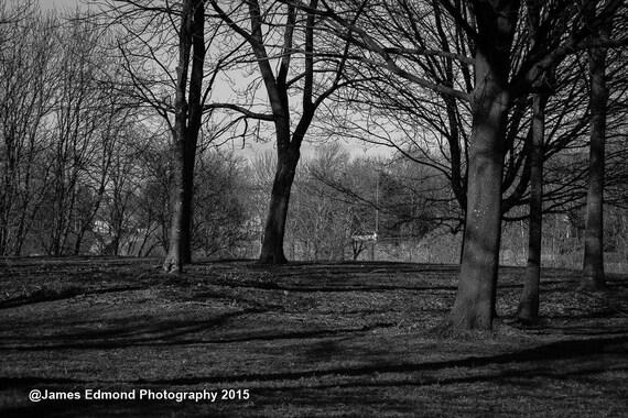 Nature Photography, Around the Park, Park Photography, Wall Art, City Park, Nature prints, Nature Wall Art, 7x5, 10x8, small prints, Glasgow