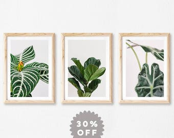 Tropical Print Set, Tropical Wall Art, Nature Photography, Set of 3 Prints, Fiddle Leaf Fig, Modern, Minimalist Art, Houseplant Leaves