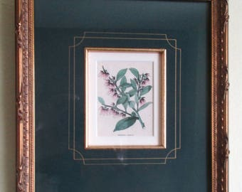Antique Framed Andromeda Botanical With Custom Double Mat