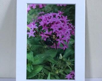 Bumble bee & flower 4x6 print
