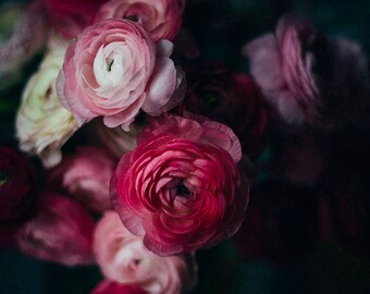 Still Life Photography, Dark Moody Floral Print, Ranunculus Print, Dark Floral Photo, Botanical Print, Nature Photo, Moody Wall Art, Print