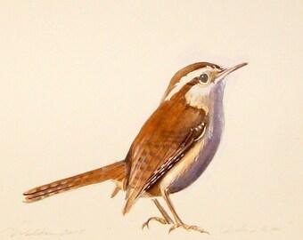 original watercolor Carolina Wren bird paintings