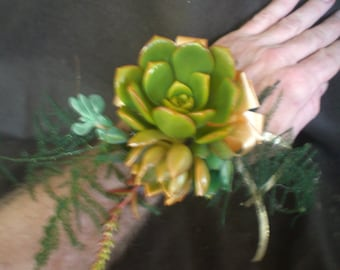 Growing Succulent Corsage