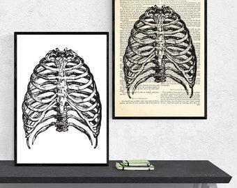 Anatomy A3 Print, Anatomy Art, Anatomy Gift, Anatomy Print, Anatomy Poster, Anatomy Wall Art, Medical Student Gift, Anatomical Art, Rib Cage