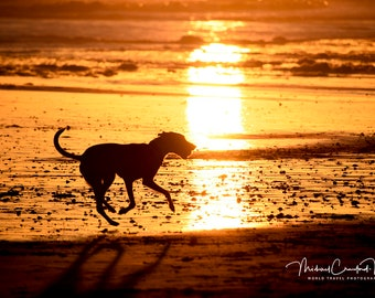 Silhouette of a Dog running on the beach at Sunset (Orange glow with sand, waves and sun)