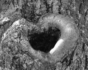 Black and White Heart Photo, Natural Heart Art Photograph in Tree, Woodland Decor, Romantic