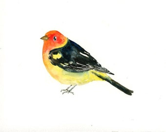 Western tanager painting, Bird art, bird watercolor, animal art, original watercolor painting 10X8inch