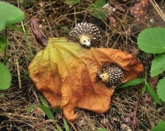 Miniature Dollhouse FAIRY GARDEN ~ Miniature Fairy Garden Hedgehogs Hide And Seek hedgies having fun! ~ NEW