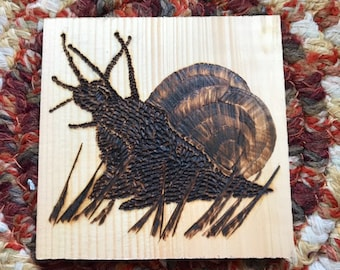 Wood Burned African Snail