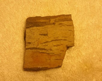 Collectors Piece Vintage Petrified Wood Found in the Front Range Rocky Mountains of Colorado Springs, Co. at 6500 ft  Above Sea Level