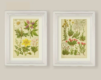 Set Of 8 Botanical Prints Gallery Wall Wild Alpine Flowers  A4 or 5x7